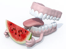 Open denture with arms and watermelon slice on hands Royalty Free Stock Image