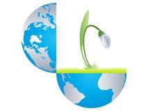 Open Earth Witn Snowrop Inside Stock Image