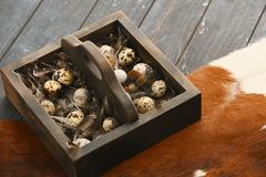 Open eco-friendly wooden box with feathers and quail eggs on animal skin. Rough dyed wooden background. Eggs For Easter. Boho stile stock photography