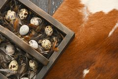 Open eco-friendly wooden box with feathers and quail eggs on animal skin. Rough dyed wooden background. Eggs For Easter. Boho stile royalty free stock photos
