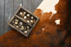 Open eco-friendly wooden box with feathers and quail eggs on animal skin. Rough dyed wooden background. Eggs For Easter. Boho stile royalty free stock image