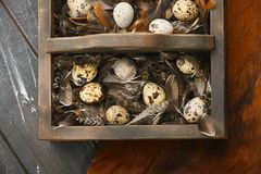 Open eco-friendly wooden box with feathers and quail eggs on animal skin. Rough dyed wooden background. Eggs For Easter. Boho stile royalty free stock images