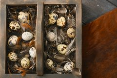 Open eco-friendly wooden box with feathers and quail eggs on animal skin. Rough dyed wooden background. Eggs For Easter. Boho stile stock photos