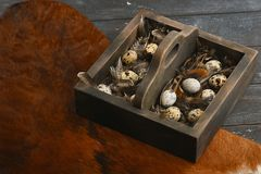 Open eco-friendly wooden box with feathers and quail eggs on animal skin. Rough dyed wooden background. Eggs For Easter. Boho stile stock images