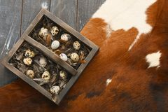 Open eco-friendly wooden box with feathers and quail eggs on animal skin. Rough dyed wooden background. Eggs For Easter. Boho stile royalty free stock photo