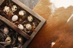 Open eco-friendly wooden box with feathers and quail eggs on animal skin. Rough dyed wooden background. Eggs For Easter. Boho stile stock image