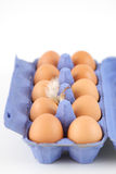Open egg carton Stock Image