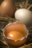 Open eggs on straw Stock Images