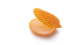 open empty scallop shell Royalty Free Stock Image