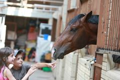 Open Equestrian Cup Royalty Free Stock Images
