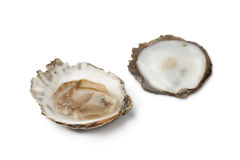 Open European flat oyster Stock Image