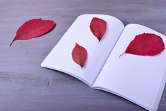 Open exercise book and red dry leaves. Against the gray wooden background stock photos
