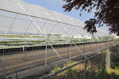 An open and Exposed Greenhouse Stock Photo