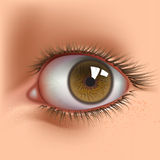 Open eye. Open human eye close up Royalty Free Stock Image