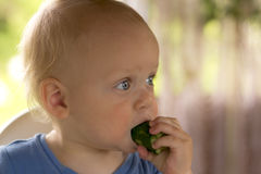 Open-eyed blondy toddler eating a cucumber and kees calm.  Royalty Free Stock Photography
