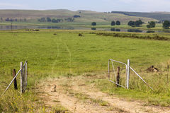 Open farm gate and green grass Stock Image