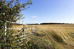 Open farm gate. Open metal framed farm gate to farmland field in rural Hampshire stock images