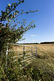Open farm gate. Open metal framed farm gate to farmland field in rural Hampshire royalty free stock photography