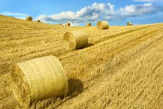 Open farmland. Yellow Harvested farmland with straw bales in warm sunlight Stock Photo