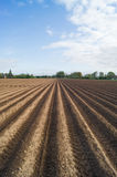 Open farmland in Doetinchem, Holland/ Netherlands. Royalty Free Stock Photo