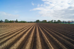 Open farmland in Doetinchem, Holland/ Netherlands. Royalty Free Stock Photos