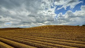 Open farmland after seed potatoes are planted, poland Royalty Free Stock Images