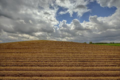 Open farmland after seed potatoes are planted, poland Stock Photography