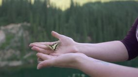 Open female hands holding a yellow butterfly stock video footage