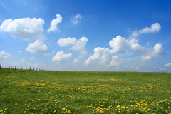 Open field. Scenic picture of a meadow full of dandelions with impressive sky and clouds at the bakground Royalty Free Stock Photos
