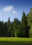 Open field. A picture of an open field, surrounded by tall fir trees Stock Images