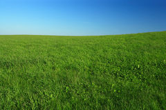 Open field. Wide open green grass field with clear blue sky royalty free stock photos