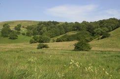 Open Field. Landscape stock image