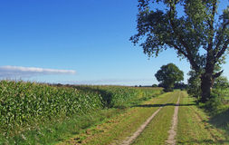 Open field with corn, trees and walking path in summer, nature reserve Netherlands Royalty Free Stock Photo