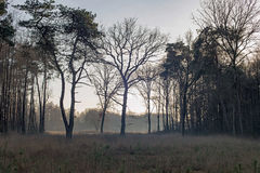 Open field in misty winter forest. Nature reserve Needse Achterv Stock Image