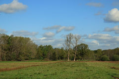 Open field, nature reserve with trees, grass, blue sky and clouds. Open meadow, field, with grasses, plants, trees in spring . Blue sky with clouds. Nature stock images