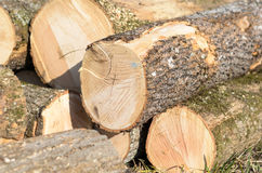 Open field with newly felled tree trunks Stock Photos