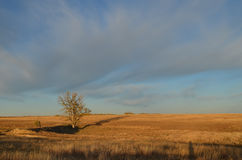 Open field and tree in Kansas. Wide view of a field in Kansas with a single tree Royalty Free Stock Image
