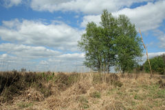 Open field with trees, grasses and beautiful clouds. Nature reserve. Nature reserve Dwingelderveld, Netherlands. Open field with grasses, heather, flowers royalty free stock photo