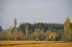 Open Field and Trees in Oregon`s Willamette Valley. This is open farm land bordered by a forest in Oregon`s Willamette Valley east of Salem Royalty Free Stock Image