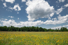 Open Field. Of wild flowers on a beautiful day Royalty Free Stock Image