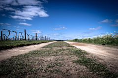 Open field. Field of wine yard in Perth, Australia royalty free stock photo