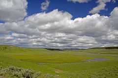 Open fields and blue skies of Yellowstone National Park. Royalty Free Stock Photos