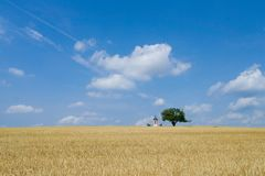 Open fields landscape with little christian chapel on a hill by the tree. Royalty Free Stock Image