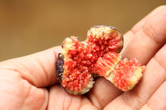 Open fig fruit Stock Images