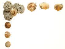 Open frame of scallop shells Stock Photos
