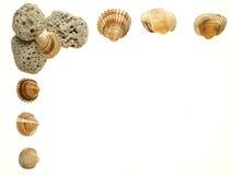 Open frame of scallop shells stock photos