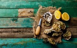 Open fresh Oysters with lemon. On green wooden background copy space royalty free stock photography