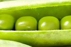 Open Fresh Pea Pod, Macro Royalty Free Stock Photography