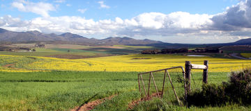 Open gate. An open gate to a canola farm near Caledon,South Africa Royalty Free Stock Image