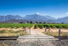 Open gate gravel road entrance to grape vines vineyard on a hot Stock Photography